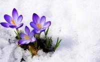SpringFever