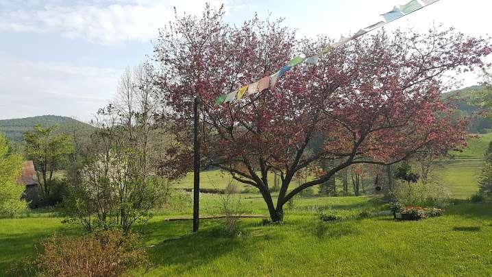 outside_prayer_flags